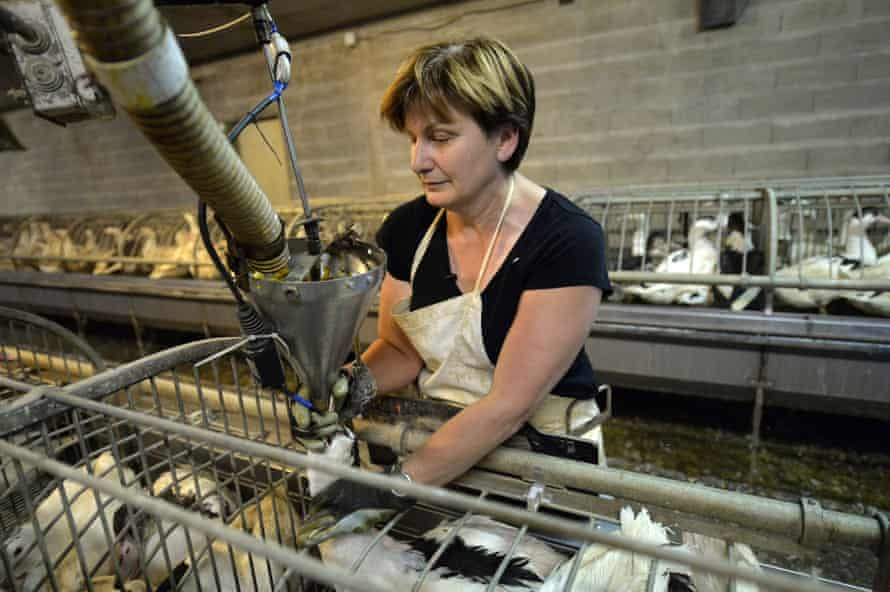 Ghislaine Lalanne force-feeds ducks at her farm in Caupenne, south-western France.