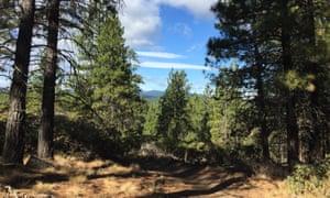 View of the KGB Trail mountain biking trail near Bend, Oregon, US
