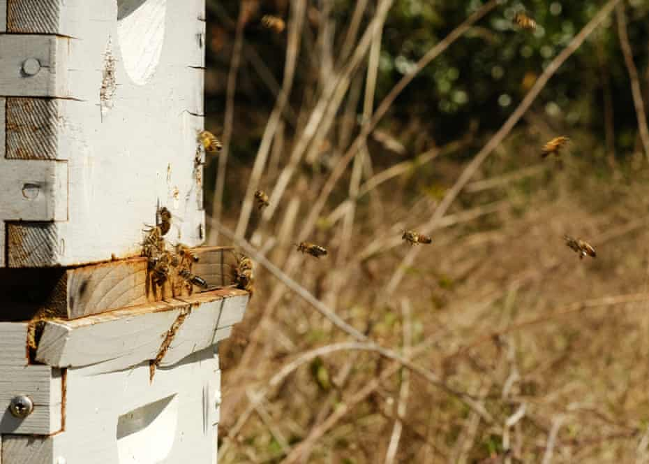 Atlanta is home to America's biggest food forest which also offers composting, beekeeping and bat boxes.