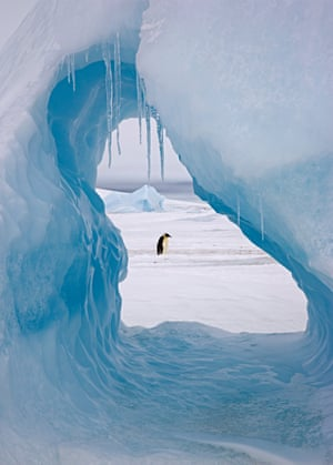 An emperor penguin is framed by a hole in an iceberg at Snow Hill Island rookery