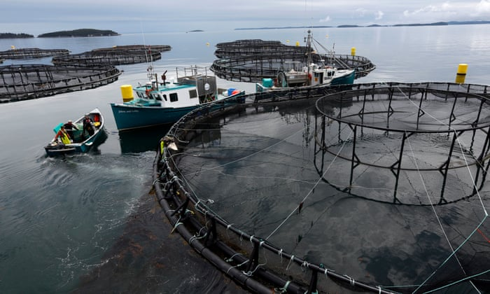 Climate crisis and antibiotic use could 'sink' fish farming