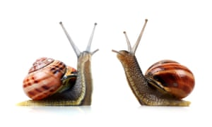 Snails: the new trendy pets?