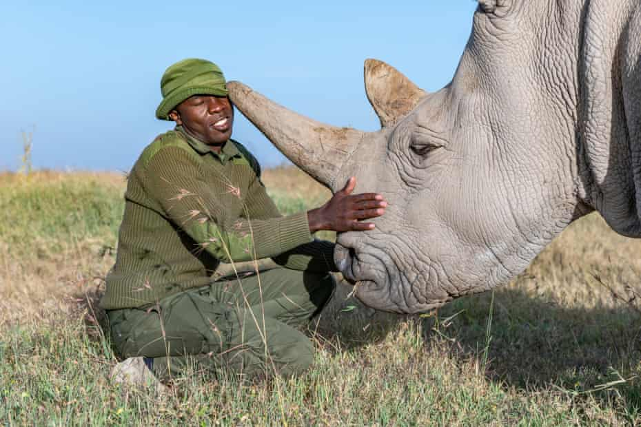 Rhino caregiver James Mwenda spends his days taking care of the northern white rhinos along with 10 other dedicated rangers.