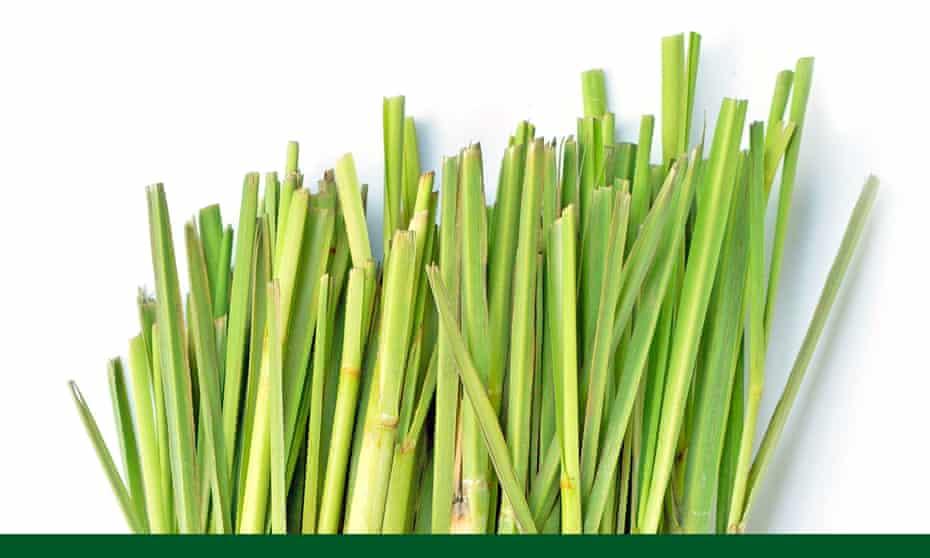 lemongrass against a white background