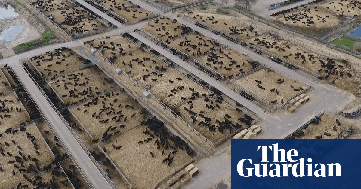 Revealed Industrial Scale Beef Farming Comes To The Uk