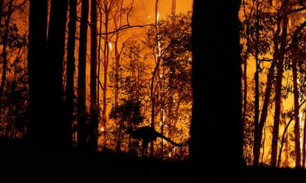 A kangaroo escapes a bushfire in Colo Heights, Australia, in November 2019