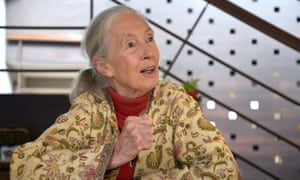 Primatologist and conservationist Jane Goodall.