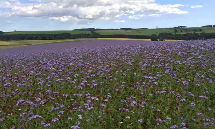 'A riot of wildflowers somewhere near Glenrothes'.