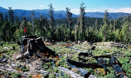 An area of Tasmania's Styx forest in 2003 after logging.