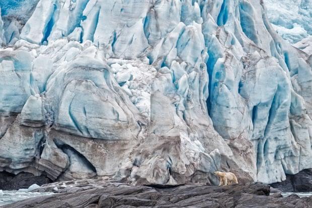 Polar bear by Anette Mossbacher