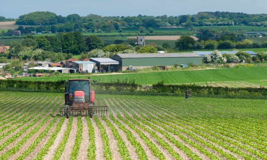 A farmer with a crop of sugar beet in England