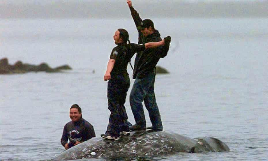 In a picture from 17 May 1999, two Makah whalers stand atop the carcass of a dead gray whale at Neah Bay, Washington.