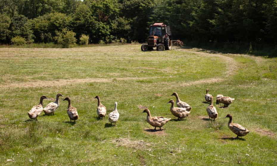 Daniel Colbourne tending to the field in the land close to Fishguard, West Wales where he and Rachel Stevens have just started a duck farm.