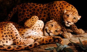 George Stubbs's Two Leopards.