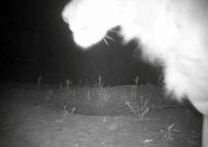 Camera trap footage confirms a previously unknown lion population in Alasha National Park, Ethiopia