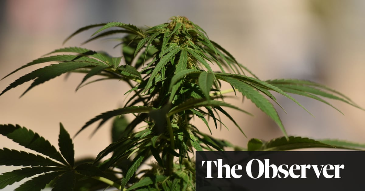 post-image-Cannabis strength doubles across Europe in 11 years
