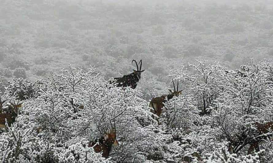 Antelopes on the Glen Harry Game reserve in Graaff-Reinet, Eastern Cape.