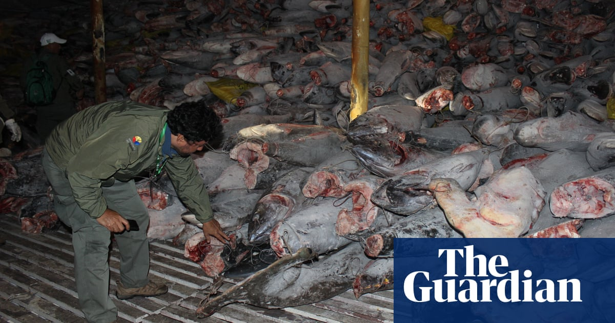 'They just pull up everything!' Chinese fleet raises fears for Galápagos sea life
