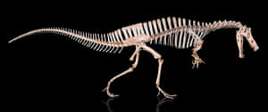The Angaturama limai skeleton.