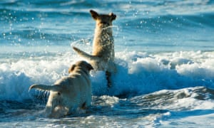 <strong>Be beside the sea</strong><br><em>Deborah Powell</em><br><br>I am lucky enough to live near the beach on the southern Atlantic coast of Spain. Time spent there with my dogs is the best way to de-stress from my time-consuming freelance job. Unfortunately, there are the summer months when there are so many tourists that the best way to stay happy is to stay at home