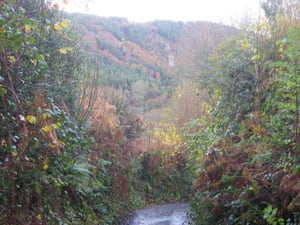 Tamar Valley below Gunnislake