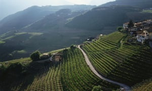 Hillside vineyards in Trentino, one of northern Italy's best sparkling wine areas.