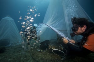 Scientists release young fish near a 'Biohut' artificial habitat that allows the fish to take refuge from predators, off Marseille
