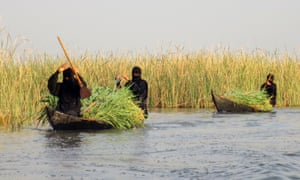 Life in the Iraqi marshes today. Women paddle two wooden boats filled with reeds.