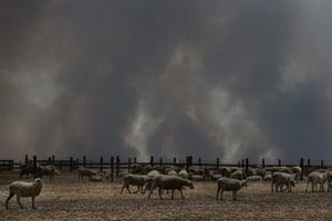 Bushfire smoke over a Kangaroo Island sheep property in January
