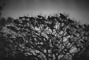 Fukase gained a reputation as a radical photographer for his earlier series The Solitude of Ravens,. Made between 1975 and 1982, it followed the end of his second marriage, to Yōko Wanibe. Fukase used the bird as a symbol of his own solitude, even saying in 1982 that he had 'become a raven'