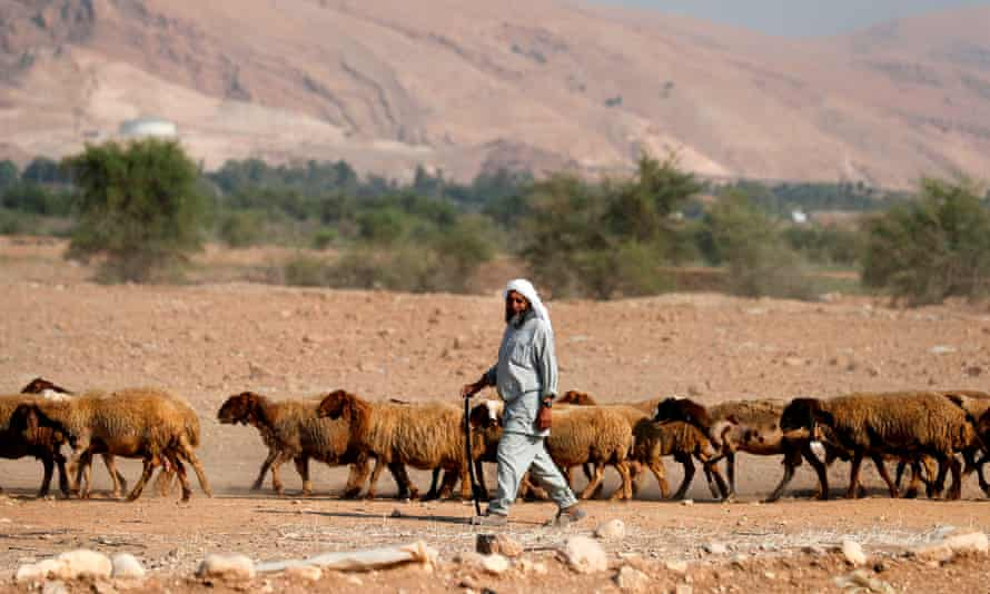 A Bedouin shepherd walks with his herd of sheep in the Jordan Valley in the Israeli-occupied West Bank on September 11, 2019