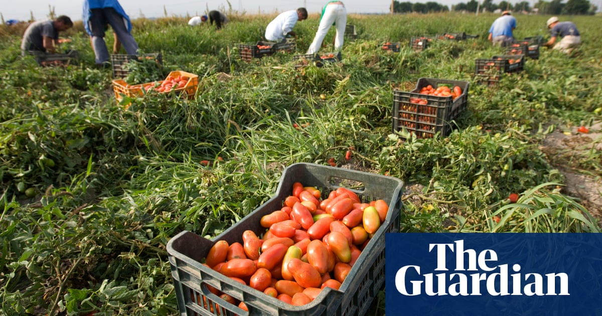 Are your tinned tomatoes picked by slave labour? | World
