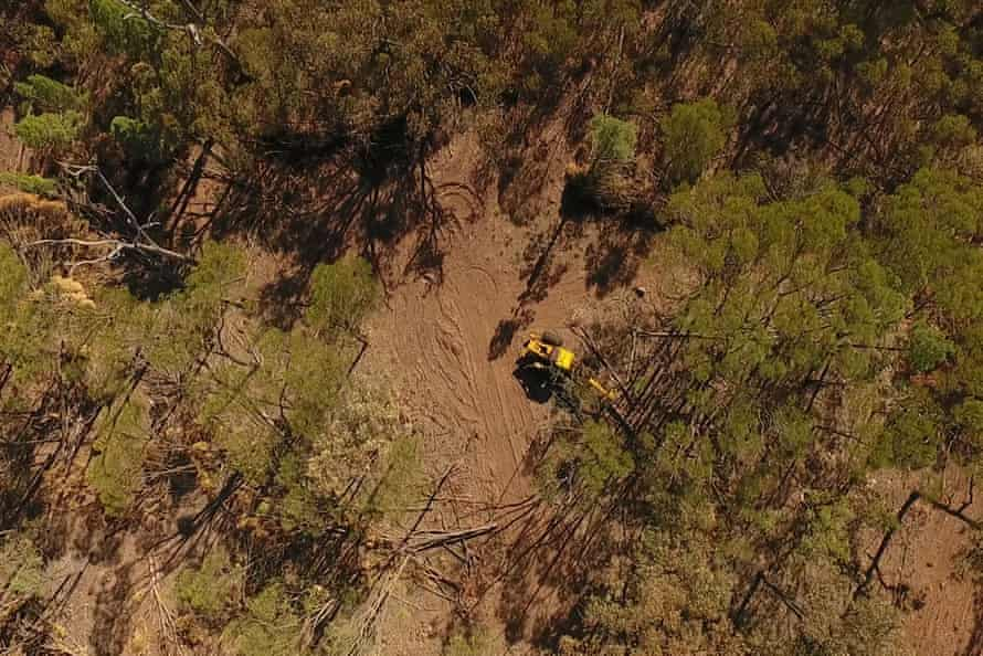 A cypress/eucalypt forest being bulldozed under the 'thinning' code in western Darling Downs in Queensland in May 2017