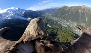 Victor, a nine-year-old white-tailed eagle equipped with a 360º camera, flies over glaciers and mountains in Chamonix, France.
