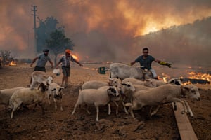 Men herd sheep away from a fire in the Marmaris district of Mugla province, Turkey