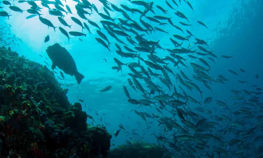 Fish around Indonesia's Wetar island