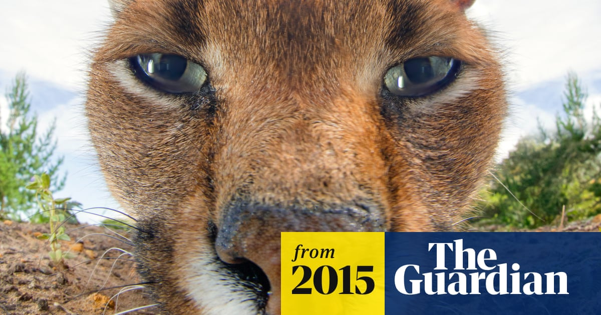 Eye shape reveals whether an animal is predator or prey, new