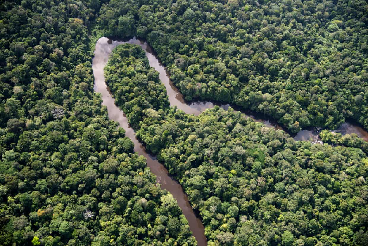 Wildlife to disappear at a catastrophic rate in Amazon because of earth's warming