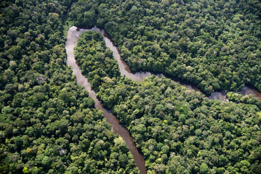 Wildlife is likely to disappear on a catastrophic scale in the Amazon if temperatures rise by more than 1.5C, the report warns.