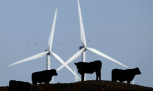 Cattle graze in a pasture against a backdrop of wind turbines which are part of the 155 turbine Smoky Hill Wind Farm near Vesper, Kan.