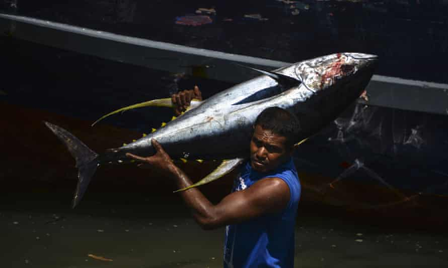 An Indonesian fisherman unloads yellowfin tuna in Aceh province, Indonesia, on 13 March 2019.