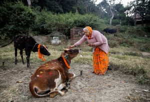 A woman offers prayers to a cow in Kathmandu, Nepal