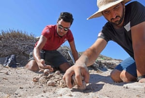 Conservation workers inspect a turtle nest
