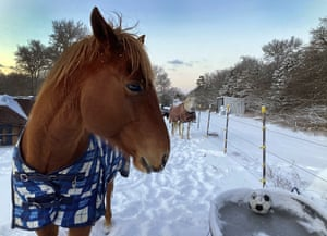 Horses wait for the ice to be broken in their water trough in Bastop County, Texas, as the sun rises Monday, Feb. 15, 2021. The area saw 4-6 inches of snow and below freezing temperatures.