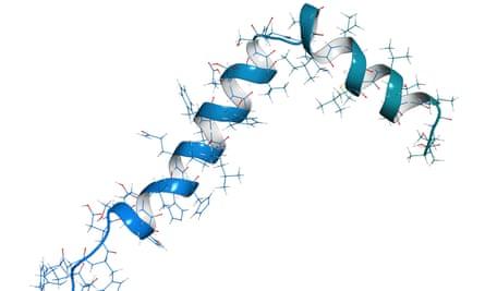 A model of the amyloid beta molecule