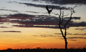 A bird flies out of a tree in the Kimberley region of Western Australia