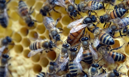 Woolworths has joined other companies to stop selling the pesticide linked to declines in bee populations.