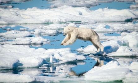 A polar bear leaps over melting ice, Svalbard Archipelago, Norway.