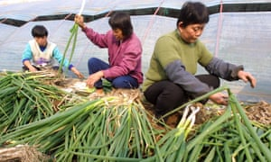 Chinese farm workers sort out leeks at an organic farm on the outskirts of Beijing