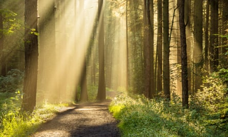 Bathed in light: a forest is the perfect place in which to unwind.